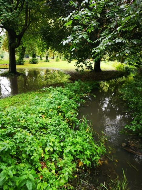FLP Helps Enhance Biodiversity at Tottle Brook Watercourse in Nottingham