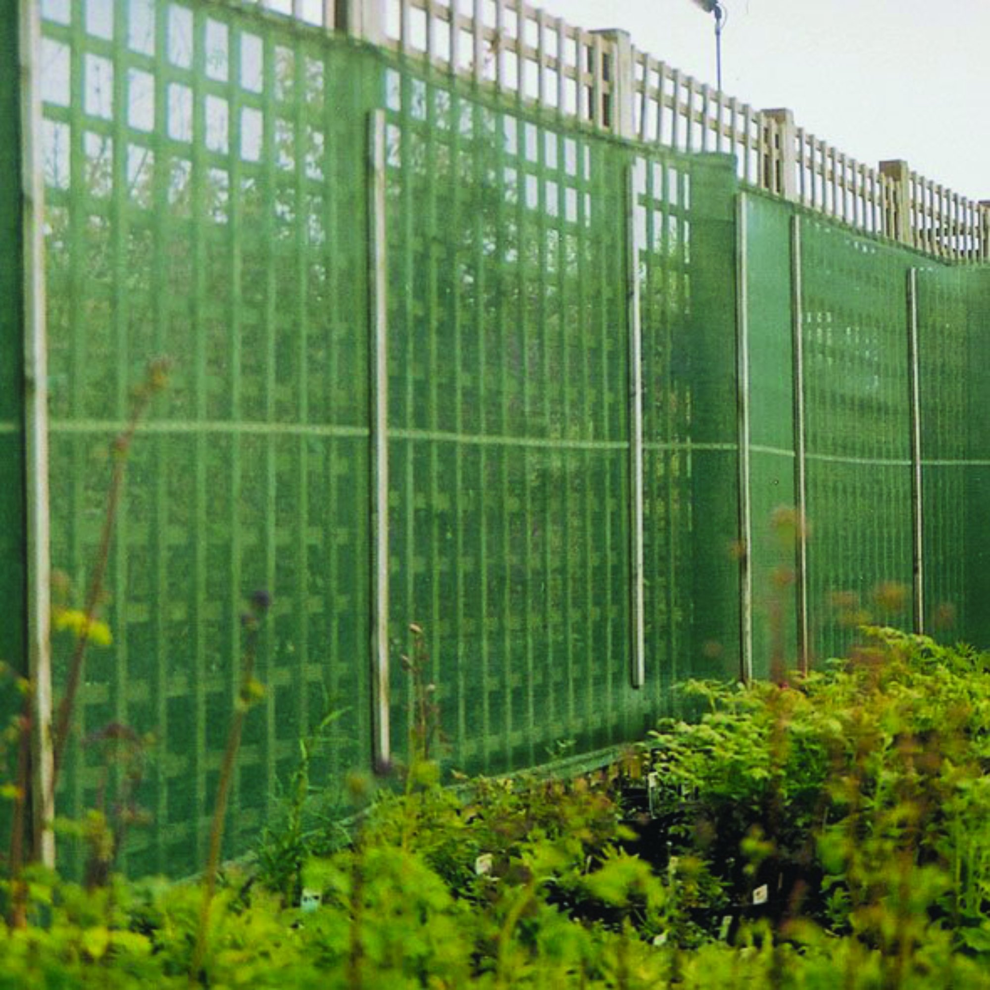 Agricultural Windbreaks